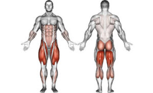 какие мышцы качаются при приседании у мужчин