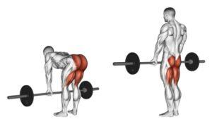 Какие мышцы работают в румынской становой тяге